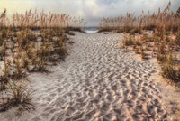 Path To The Beach Fine Art Print
