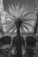 Palermo Fine Art Print