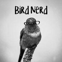 Bird Nerd - Hummingbird Fine Art Print