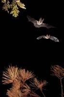 Bats And Halloween Fine Art Print