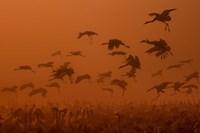 Army Cranes At Golden Sunrise Fine Art Print