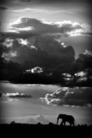 He Walks Under An African Sky Fine Art Print