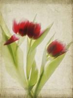 Parchment Flowers I Fine Art Print