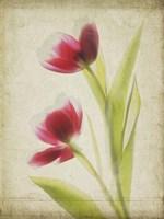 Parchment Flowers III Fine Art Print
