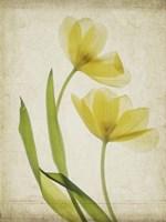 Parchment Flowers IV Fine Art Print