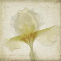 Parchment Flowers IX Fine Art Print