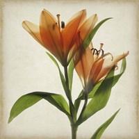 Parchment Flowers X Fine Art Print