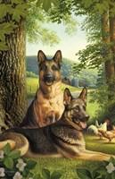German Shepards/Chicken Fine Art Print
