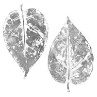 Silver Otono II  (silver foil) Fine Art Print