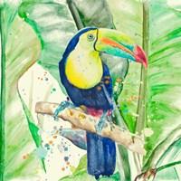 Colorful Toucan Fine Art Print