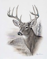 Fall Splendor Fine Art Print