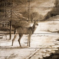 Shadows of the Forest Fine Art Print