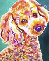 Poodle - Curly Fine Art Print