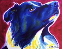 Border Collie - Bright Future Fine Art Print