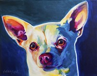 Chihuahua - Coco Fine Art Print