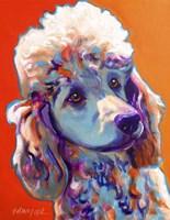 Poodle - Bonnie Fine Art Print