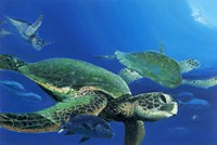 Green Sea Turtles Fine Art Print