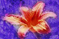 Flower XI Fine Art Print