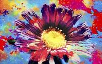 Flower XIII Fine Art Print