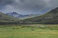 Yellowstone Bison With Rainbow Fine Art Print