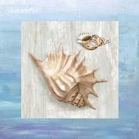 From the Sea III Fine Art Print