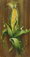 Ear of Corn Fine Art Print