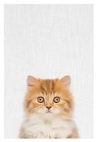 Kitten Fine Art Print