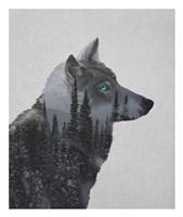 Winter Wolf Fine Art Print