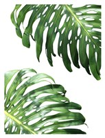 Double Philodendron Fine Art Print