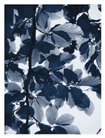 Indigo Leaves Fine Art Print