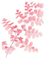 Pink Maidenhair Fine Art Print
