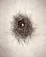 Nest I Fine Art Print