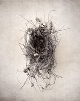 Nest II Fine Art Print