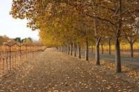 Autumn Rows Fine Art Print