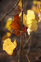 Autumn Leaves Fine Art Print