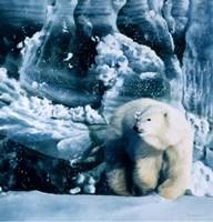 Polar Flow Fine Art Print