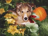 Pumpkin Farmer Fine Art Print