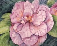 Pink Camilla Fine Art Print