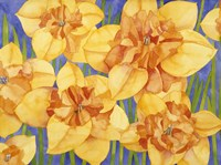 Yellow Daffodils Fine Art Print