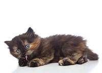 Kittens 3 Fine Art Print