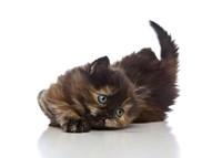 Kittens 32 Fine Art Print
