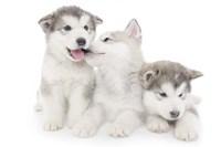 Puppies 1 Fine Art Print