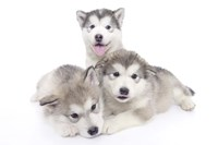Puppies 2 Fine Art Print