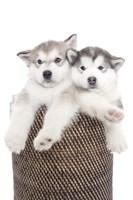 Puppies 18 Fine Art Print