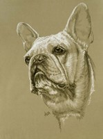French Bulldog Fine Art Print