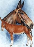 Donkey Fine Art Print