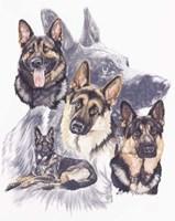 German Shepard Fine Art Print
