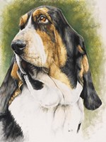 Basset Hound Fine Art Print