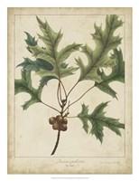 Oak Leaves & Acorns IV Fine Art Print