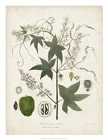 Flowering Flora II Fine Art Print